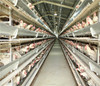 best quality poultry cage chicken farm chicken cage