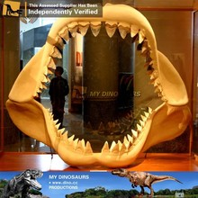 Il mio- dino in fibra di vetro denti di squalo fossili per il museo