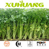 Free sample High quality celery seed extract celery seed p.e/celery root extract