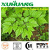 pure black cohosh powder/black cohosh powder/black cohosh root extract