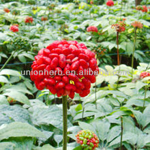 Expanding Blood Vessel Panax Notoginseng Extract Total Saponins