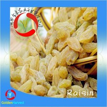 dried Raisin dried Black Currant dried grapes price from China