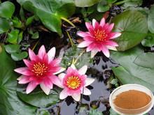 Alibaba china hot selling fda registered gorgon fruit extract