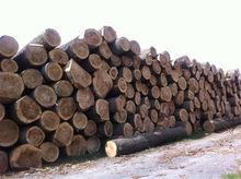 European Poplar Round Logs