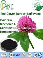 Red clover extract isoflavone HPLC 2.5%-40% Isoflavone