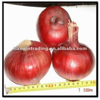 Fresh Vegetable Red Onion