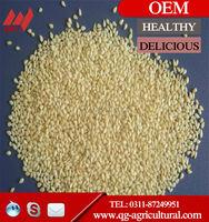 White Sesame seed price, sesame seed export,sesame seeds import price