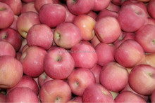 Best Price Wholesale Red Mature Apple