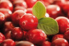 China wholesale Cranberry Extract 5%, 10%, 20% / 100% Natural Cranberry Extract powder / high quality Cranberry Extract Capsules