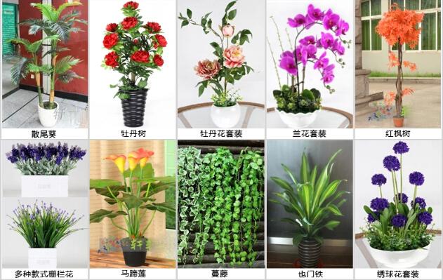 Guangzhou f brica de alta qualidade por atacado pre o for Clases de plantas ornamentales