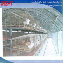 Rabbit Breeding Cages, Rabbit Meat Price for Sale