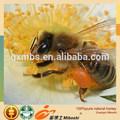 17 year profesional OEM 100% australiano natural miel a granel