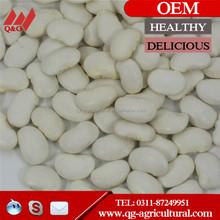 types of kidney beans white kidney bean