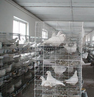 poultry battery cage system/pigeon breeding cage with high quality and best price