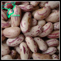 Chinese Origin B/2 Grade Rajma Chitra or Light Speckled Sugar Beans For Sale