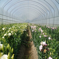 all types of fresh flowers export from China