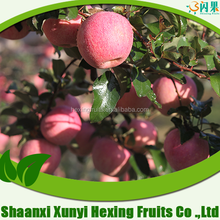 Chinese products wholesale red fuji apples