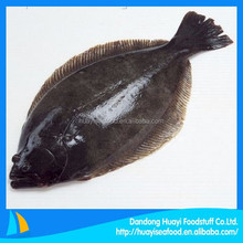 supply various hot sale frozen flounder fish with low price