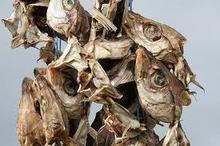 Fresh and Frozen Horse Mackerel Fish, Herring Fish ,Dry Stockfish