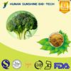 High quality Broccoli extract powder 0.5%-10% Sulforaphane CAS: 4478-93-7