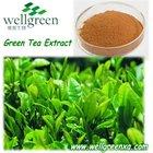 chá verde extrato catequina