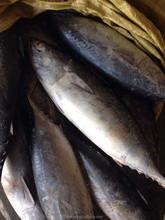 fresh tuna loin of bonito tuna