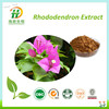 Plant Extract Natural Rhododendron Extract, Proanthocyanidin 70%