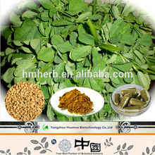 High Quality Fenugreek P.E. Powder 5:1 10:1 , 4-Hydroxyisoleucine 98% ( 4-OH-Ile ) , Furostanol Saponins