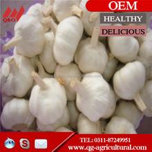 cheap price pure white garlic and normal white garlic 5.0cm in China