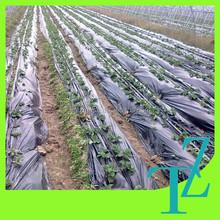 Silver black LLDPE mulch film for strawberry garden