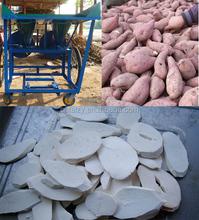fresh cassava root