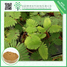 China Supplier High Quality Herbal Extract / natural herb mimosa pudica extract 5:1