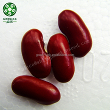 2015 Crop 200~220pcs Dark Red Kidney Beans