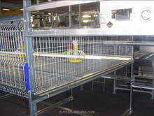 cheap automatic bird cage/ poultry equipment