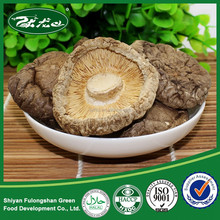 Wholesale Price Wild Natural brand name of mushroom