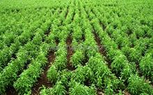 Lowest price slim stevia sweetener 97% sweeteners