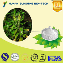 100% natural health food Herb Huperzia Serrate P.E./ 98% Huperzine A white powder form