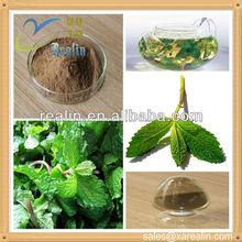 Manufacturer supply Wild Mint Herb Extract Powder