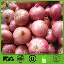 fresh type fresh onion importers