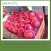 Bulk fresh apple fruit to dubai market competitive price,yantai fuji apple