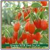 haccp mixed dried fruit/dates/goji berries /apricot /raisin /dried mango with organic food