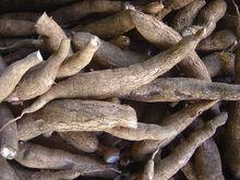 Cassava (fresh + dry)
