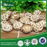 2015 HOT Cheap Market Prices for Mushroom for Sale