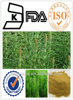 factory Supply plant extract CAS NO.: 1343-98-2 Horsetail Extract / Horsetail p.e./ Horsetail
