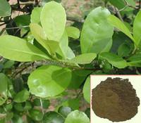 100% Natural Yerba Mate Extract, High quality Yerba Mate Extract powder/25% polyphenol; 4:1