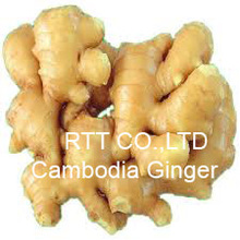 Cambodia Ginger