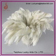 Venta al por mayor gallo blanco cola pluma