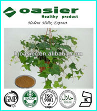 GMP Manufacture Supply Dried Ivy Leaf Extract
