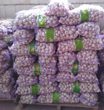 5.5cm Fresh Normal White Garlic Price in Shandong Jining