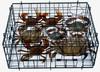 High quality round folding crab traps